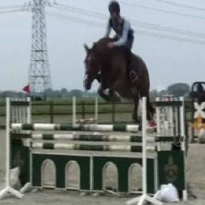 Amarilla, Jumping horse