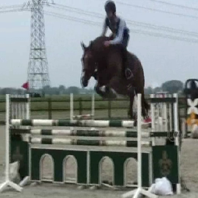 super careful jumping horse