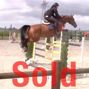 amyra jumping horse