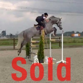 Bas, Equitation horse for sale