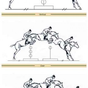 Show jumping horses: Training tips.