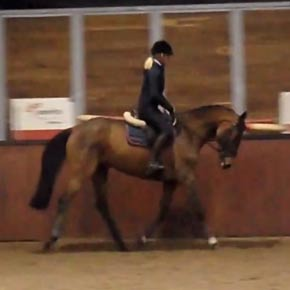 quinara amateur horse for sale