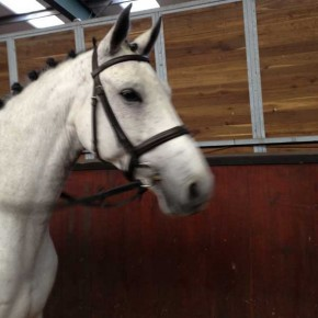 Bemi, hunter for sale