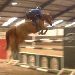 brave-jumping-horse-for-sale