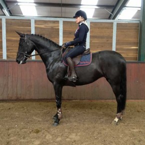 Easy show jumping horse