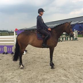 Future grand prix horse, zirkonia