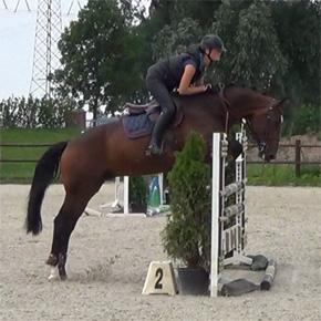 dutchsporthorses-schoolmaster-dominant